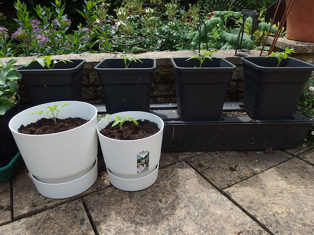 The compost trial set up