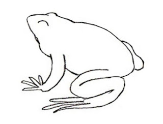 How To Draw Frog Easy Steps