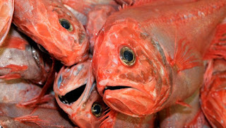 orange roughy, deep-sea trawl, New Zealand, destructive fishing