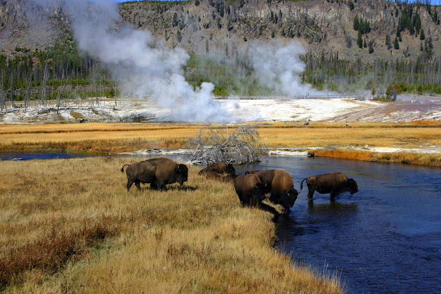 Yellowstone National Park ialah taman nasional di Amerika Serikat 56 Fakta menarik perihal Yellowstone