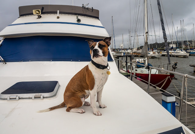 Photo of Ruby on look-out duties on Ravensdale's foredeck