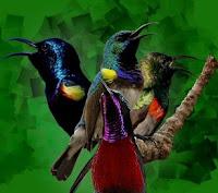 Dengan Memelihara Jenis Dari Burung Master Lainnya