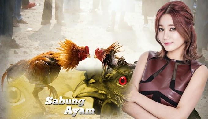 Inilah Beberapa Jenis Pakan Ayam Bangkok Terbagus Bagian1