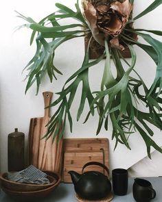 Conheça 14 tipos de samambaias para sua decoração.
