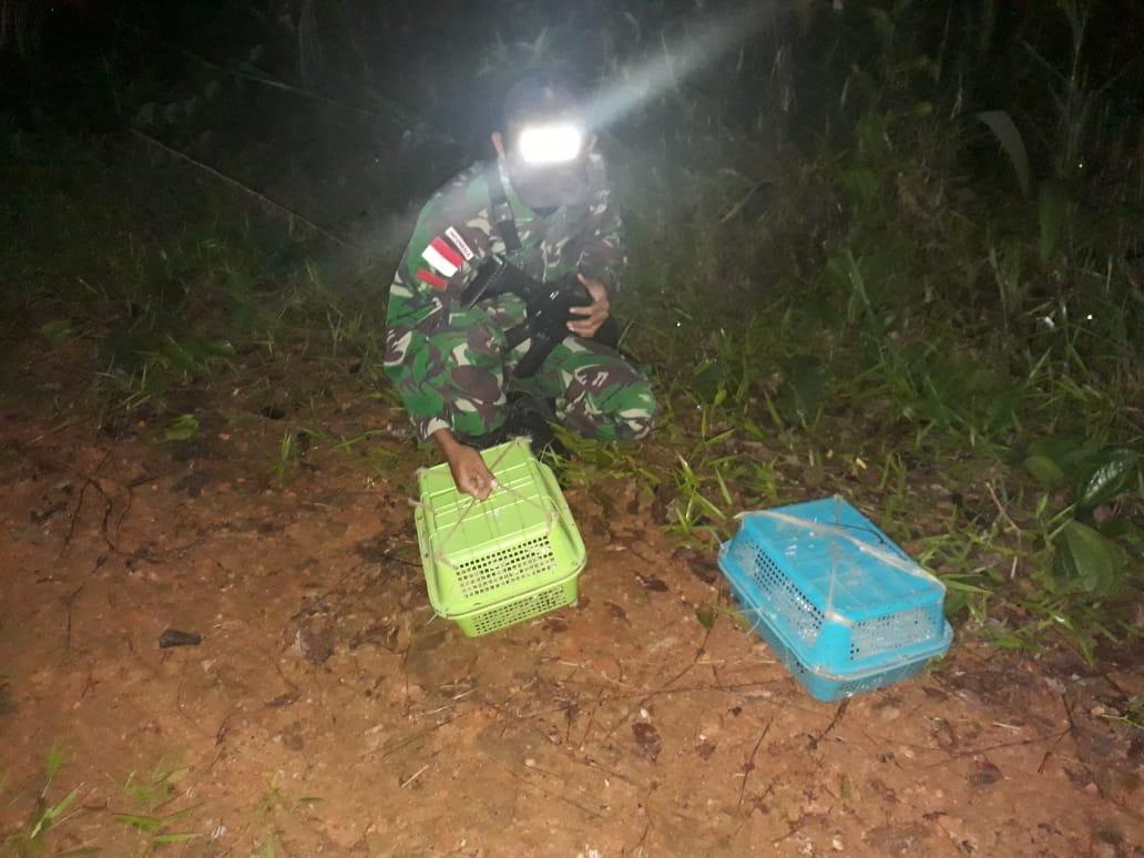 Satgas Pamtas RI-Malaysia Yonif 642 Gagalkan Penyelundupan Satwa Ilegal