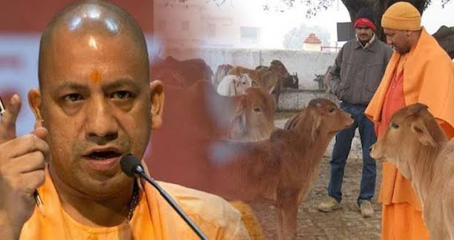 VILLAGERS WILL BRING STRAY CATTLE TO YOGI ADITYANATH'S RESIDENCE ON 26 JANUARY