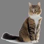 cat in spanish