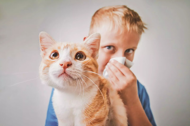 How to live with allergies and pets