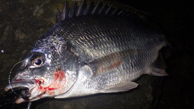 キビレ ボトムチニング 湾奥 河川 デコイ タンクヘッド 2.5g + バークレイ インチホッグ