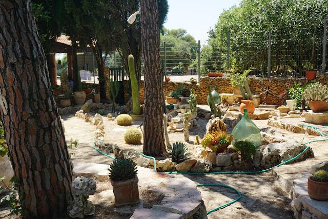 גן קקטוסים במוחרקה