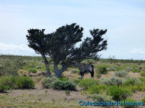 Etosha Animales Namibia Safari Oryx