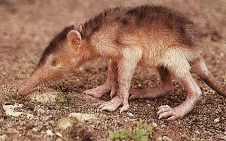 Hewan Yang Sulit Ditemukan Di Muka Bumi