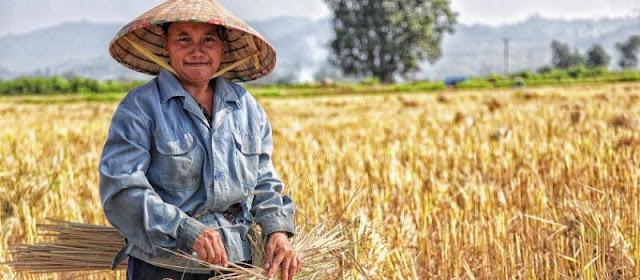 voyage au Vietnam en novembre