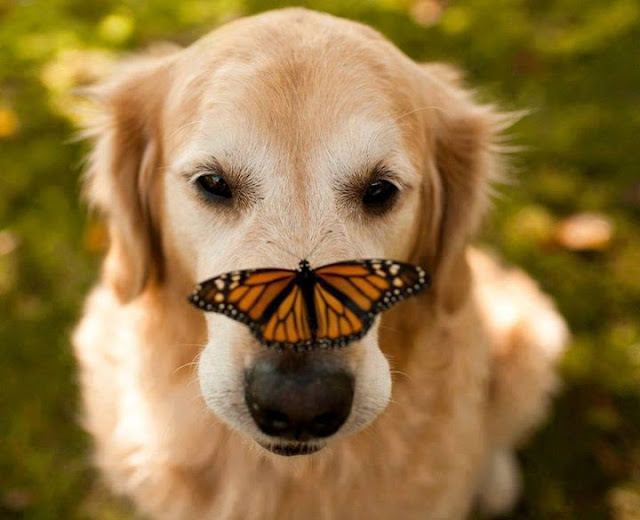 Butterflies play with animals