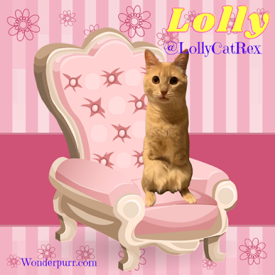 https://www.instagram.com/lollycatrex/