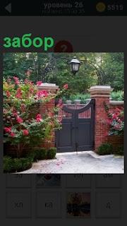 Ворота сделаны в заборе и растут по бокам высокие кусты, на которых распустились красные цветы