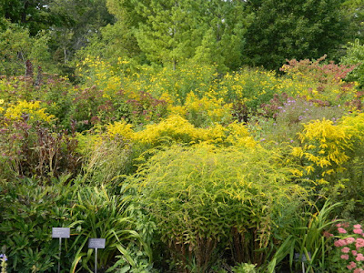 Toronto Botanical Garden autumn perennial border by garden muses-not another Toronto gardening blog