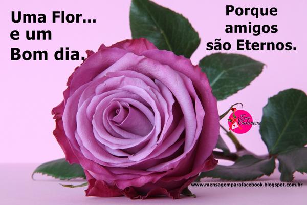 Vídeo De Bom Dia Com Lindas Flores De Fundo Para Enviar: Mensagens Para Facebook: Amigos