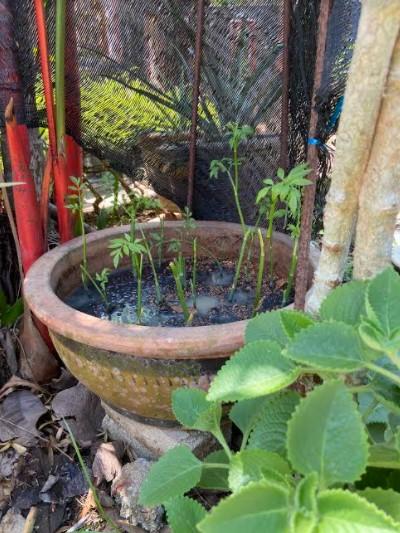 pkp, pkpb, aktiviti isi masa, hasil tanaman, berkebun, fotografi