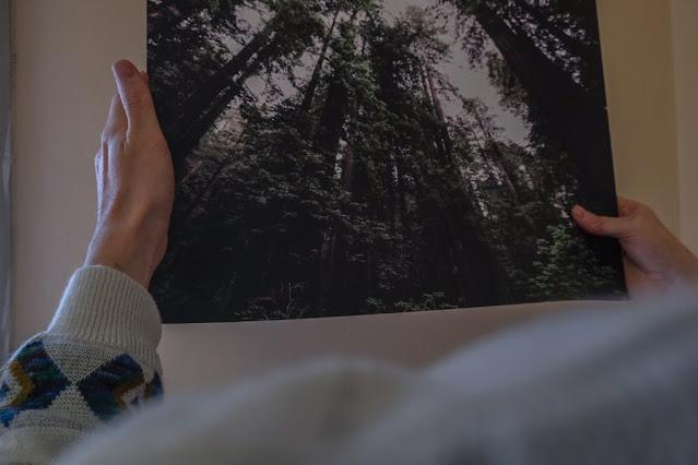 quadri di bosco