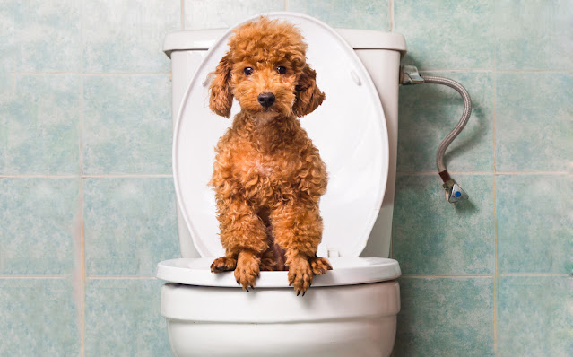 Why Do Dogs Follow You To The Bathroom? Why Can't They Just Wait?