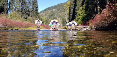 Three people wearing hip waders carry large white bags over their shoulders as they start to wade through a river.