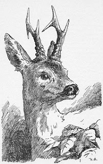 Bambi könyv