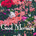 Top 10 Good Morning Images, Greetings, Pictures for whatsapp Facebook  - bestwishespics