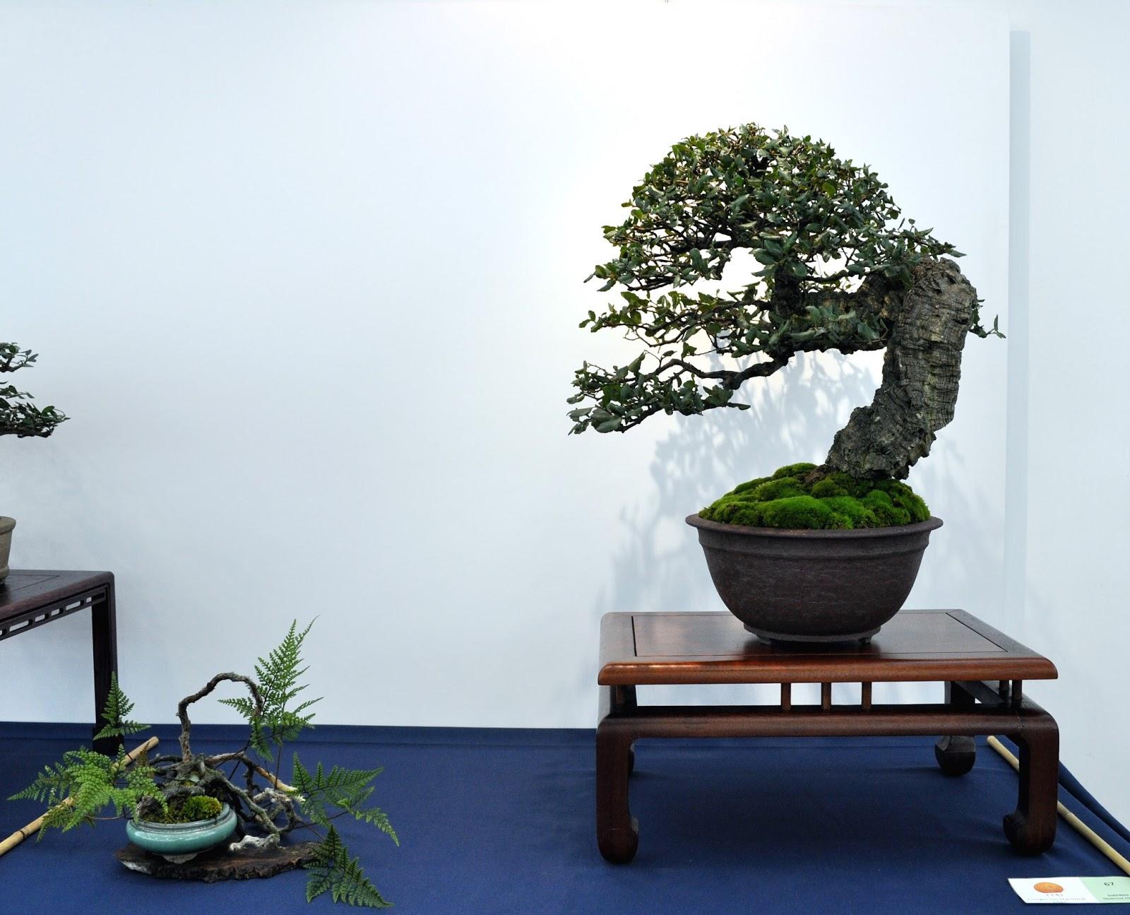 Identification Conifers I