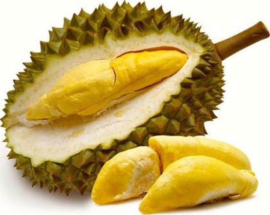 Bibit Tanaman Buah Durian montong Unggul varietas dijamin asli dan bergaransi Salatiga