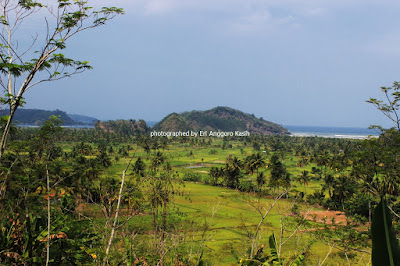 Hamparan sawah yang indah dengan latar belakang Pantai Palatar Agung.