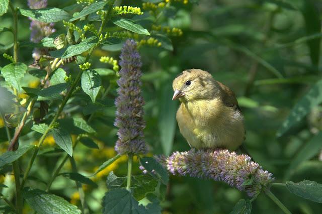 Ottawa Valley Wild Bird Care Centre
