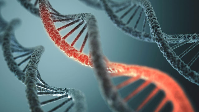 New techniques better determine how ancient viral DNA influences human genes