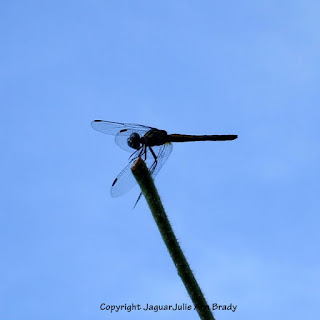 Dance of the Dragonfly step 2