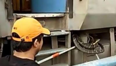 Raja kobra di dalam mesin gergong kereta api