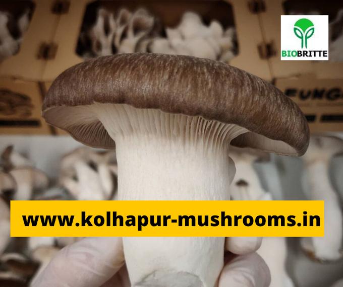 Mushroom training in Chiplun , Ratnagiri | Learn mushroom business