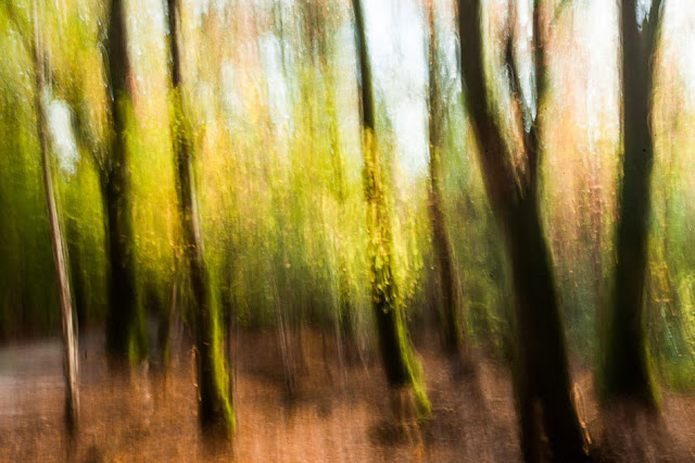 Creative blur pic of a woodland scene