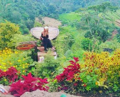 Alamat & Harga Tiket Masuk Bukit Pelangi Mojokert, wisata mojokerto, taman bunga mojokerto, desa wisata jambul jatirejo