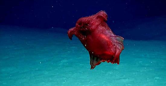 Bizarro Monstro Galinha Sem Cabeça  foi filmado na Antártica pela primeira vez - Capa