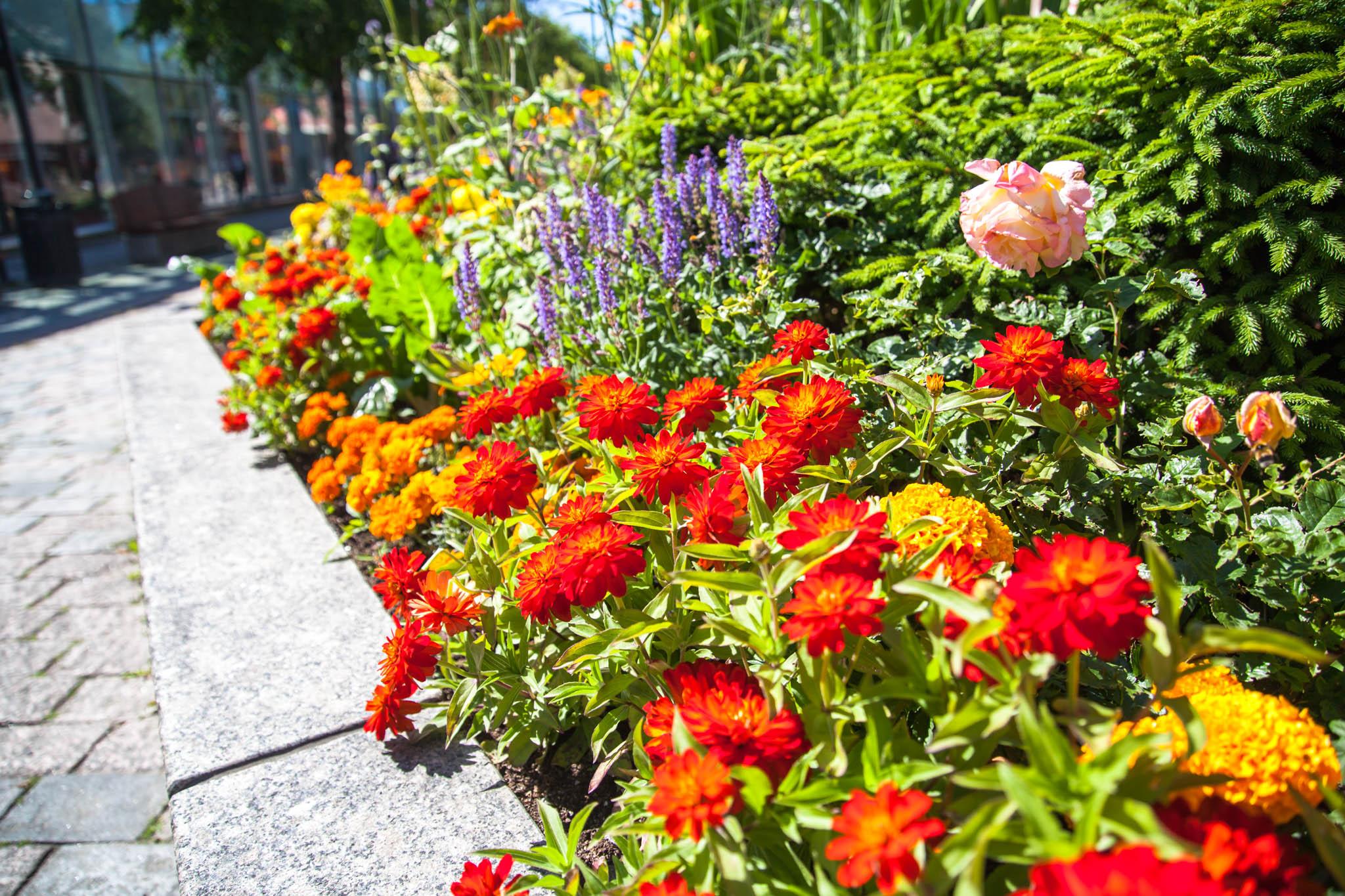 Kokkola kukkia