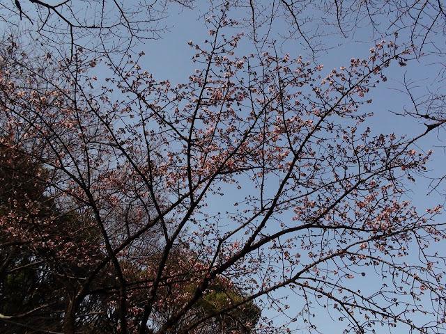 Flores en el parque Ueno de Tokio