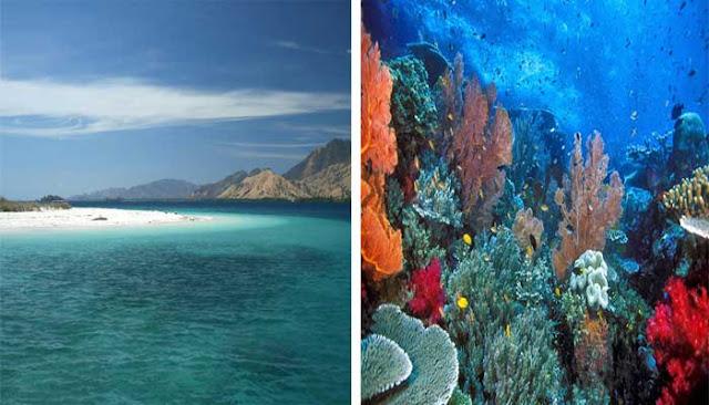 Destinasi Favorit Untuk Diving Dan Snorkeling Di Nusa Tenggara Timur