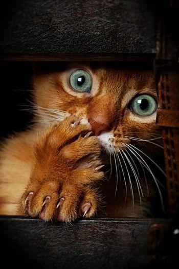 Divertida cara de gato asombrado - incredulo