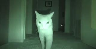 ¿Pueden los gatos ver fantasmas y espíritus?