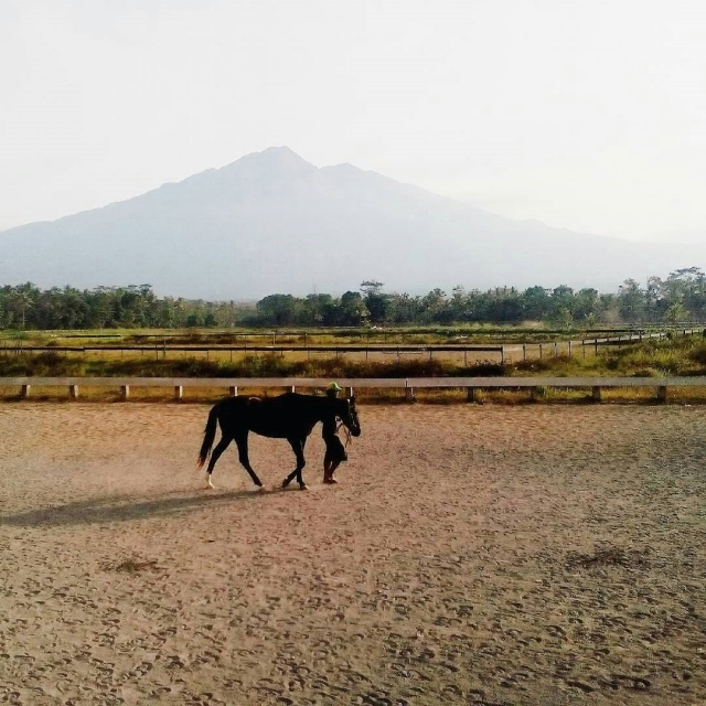 Pacuan Kuda Arrow Head Kota Salatiga