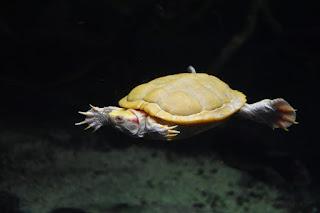 membersihkan-akuarium-kura-kura.jpg