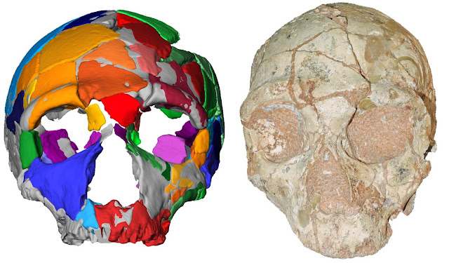 Earliest known Homo sapiens in Eurasia found in Greece
