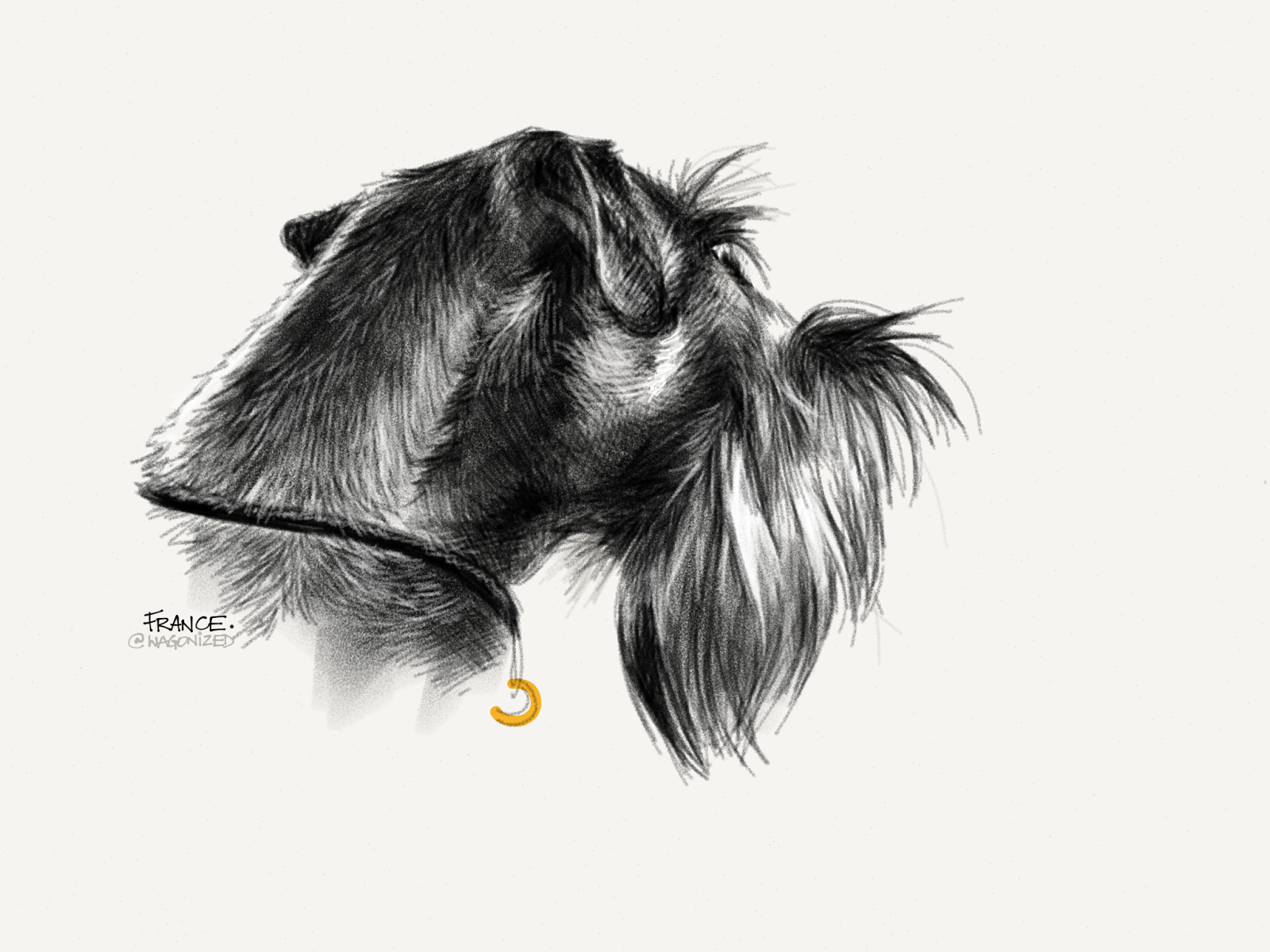 Schnauzer Drawing Easy: Wagonized: LISA'S SCHNAUZER