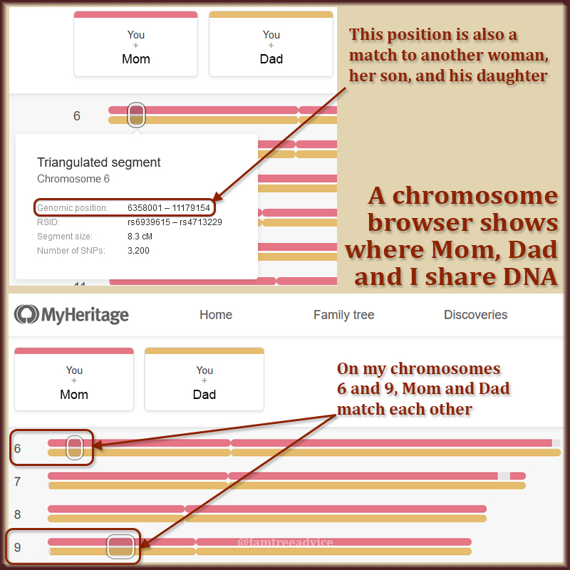 I used a chromosome browser to see exactly where Mom and Dad are related to each other.
