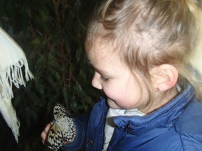 wystawa żywych motyli, kraków